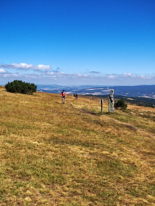 Montjoies and hikers, the ascent to Mont Lozere
