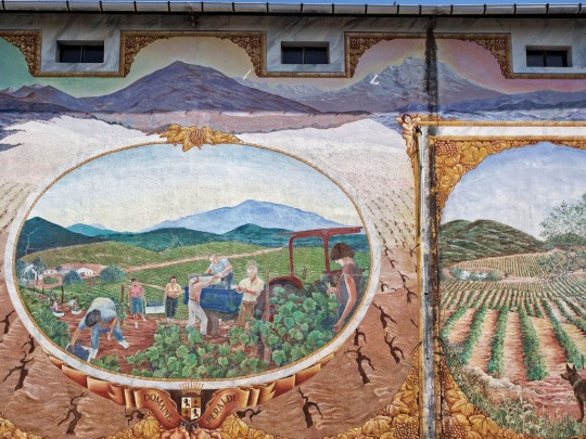 Colourful wall art, vineyard near Ajaccio