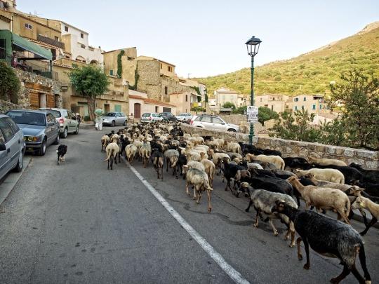 A Corsican village traffic jam!