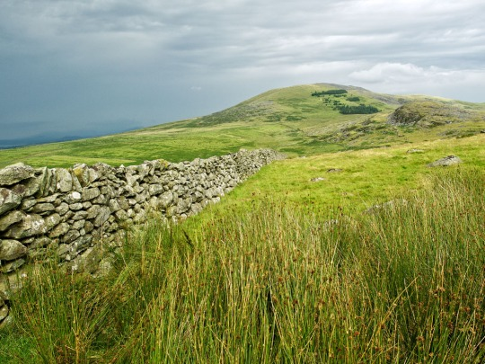 Stone wall, Wales