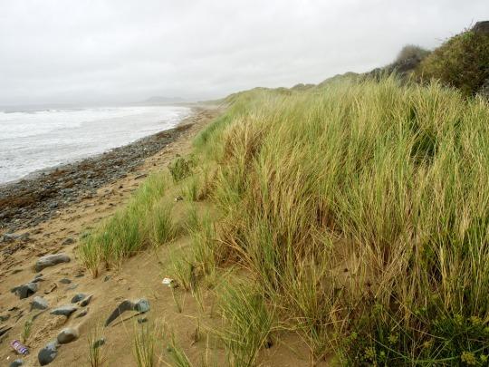 Rocky beach, Harlech Wales