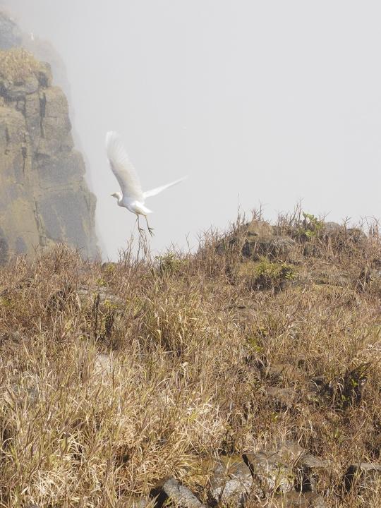 Egret at Victoria Falls, Zimbabwe Africa
