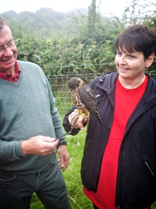 Teresa is in love, Physician guest's falcon- Nick's estate, Devon